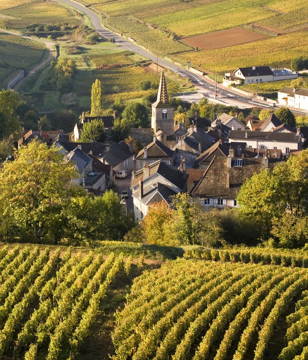 Vignes de Bourgogne